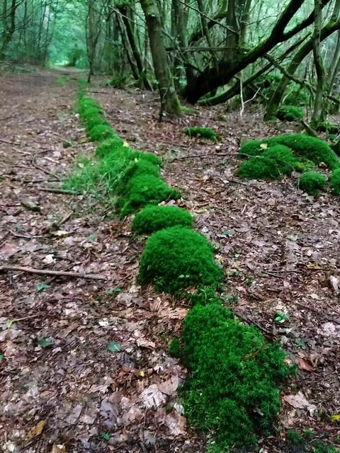 Wolfgang-Hanau Forest, Germany