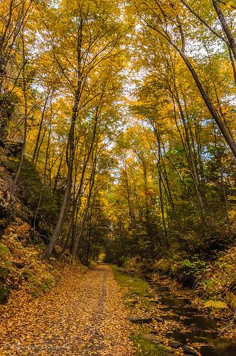trees usa fall leaves us unitedstates fallcolors connecticut bolton foilage railstotrails 2015 boltonconnecticut billcannon hoprivertrail billandkent