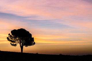 tree and sunrise | by dellandre80