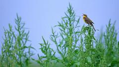 а birds_098