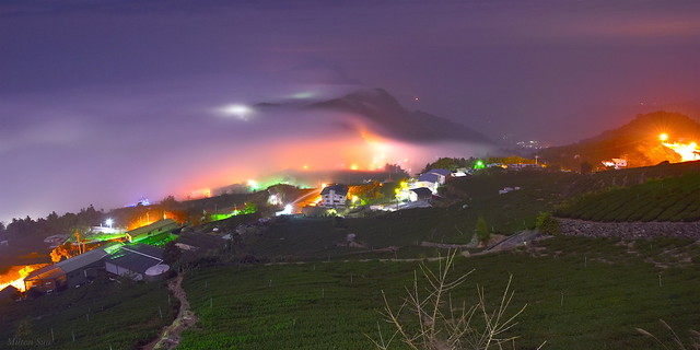 [Low Clouds cover Tea Farms at Nightfall]