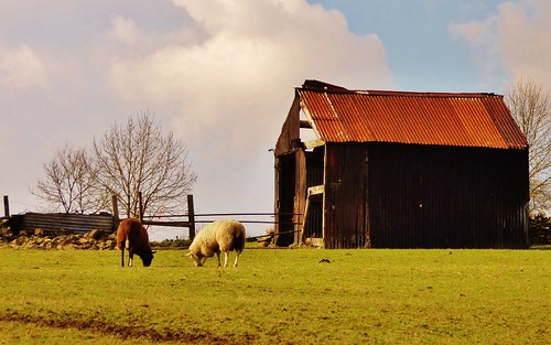 Shed near Longnor | by grassrootsgroundswell