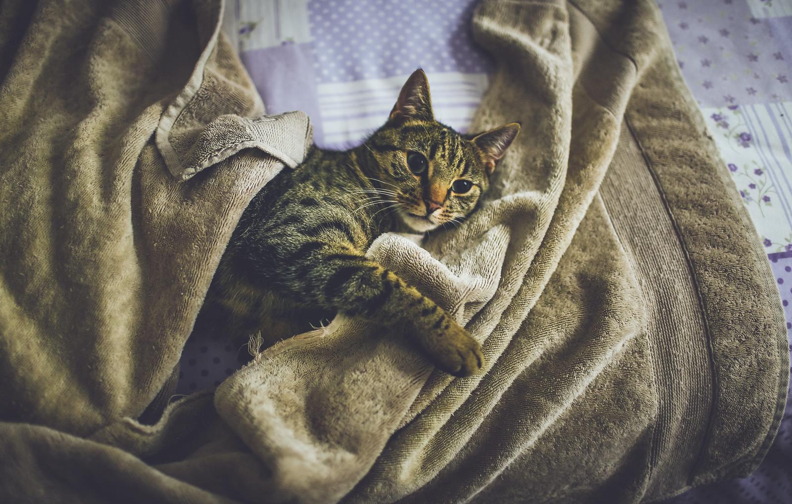 My cat likes damp bath towels