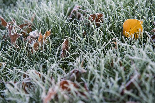 winter ohio geotagged nikon frost nef explore eaw frozenfog cs6 canalfultonohio d3s starkcountyohio nikkor24120f4vr