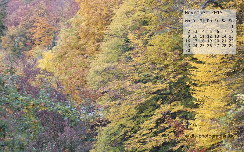 wald_november_kalender_die-photographin