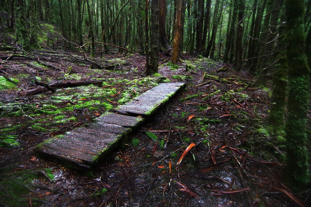 Day 4: First snow in Pine Valley | The Overland Track is ...