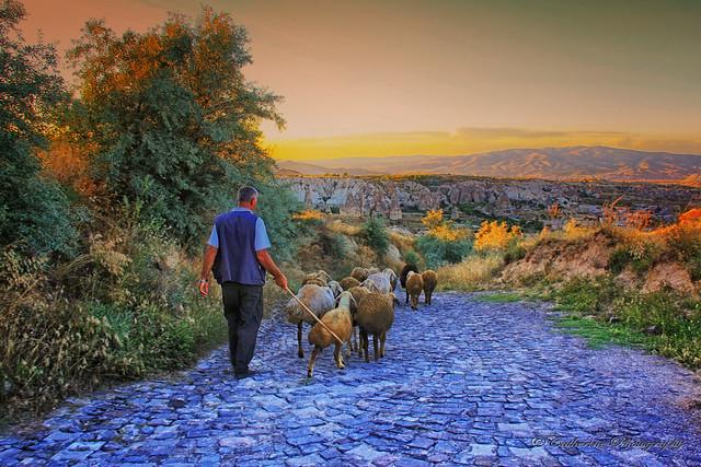 Shepherd, Cappadonia