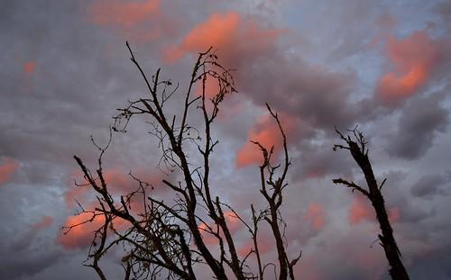 sunset australia nsw sunsetclouds deadtrees northernrivers sunlitclouds scrubbycreek backcreekvalley