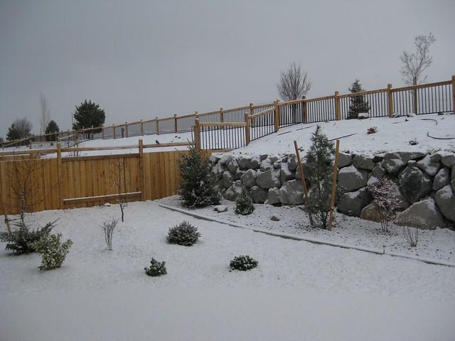 Nevada Christmas in my own backyard