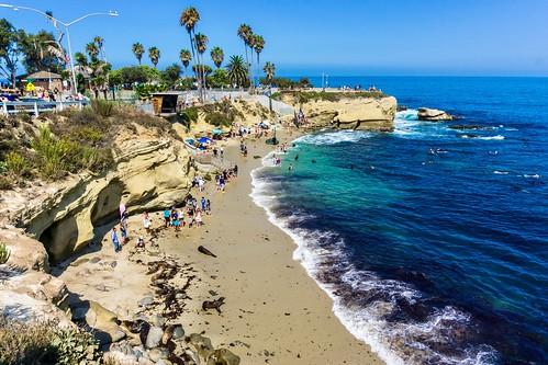 sealion wildlife beach water sealions sandiego seal sunny summer sand california seals lajolla tourists ocean landscape