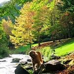 #川 #秋 #落ち葉 #黄葉 #stream #autumn #fall #creek #fallenleaves #bench  #retriever #ilovegolden_retrievers #犬 #レトリバー #ゴールデン #犬バカ部 #癒しワンコ #ふわもこ部 #ゴールデンレトリバー  #dogsofinstagram #ilovemydog #dogoftheday #dogsofinstaworld #mydogiscutest #instadog #adventurewithdogs