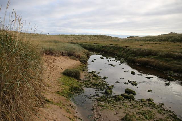 Arboll links near Portmahomack