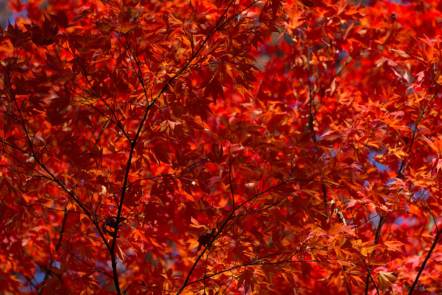 Fall on fire
