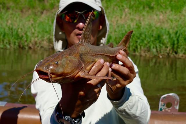 Fishes of the jungle amazon river Peru