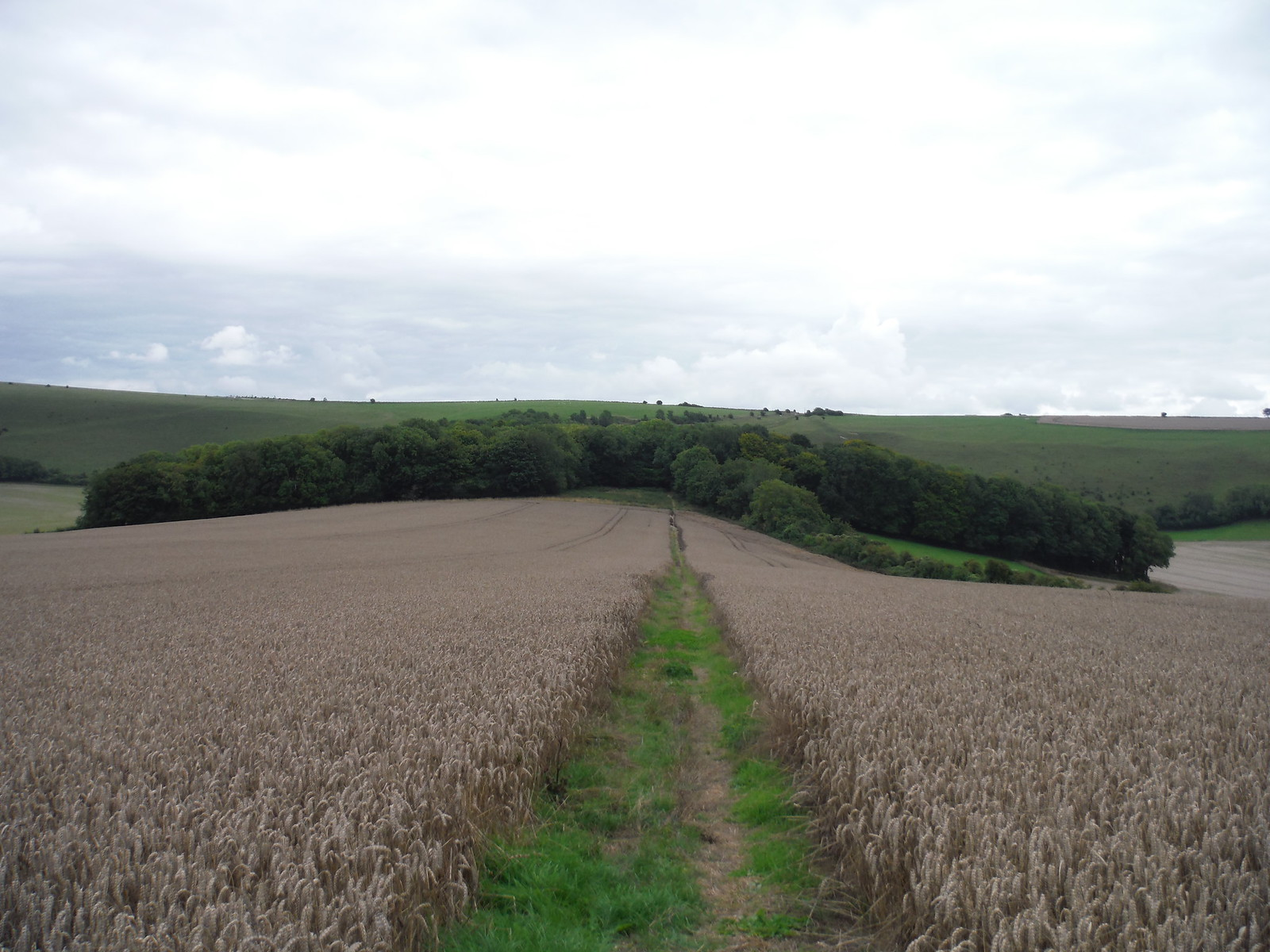 Towards Picket's Close/Elliot's Shed Woods SWC Walk 251 Tisbury Circular via Ludwell and Berwick St. John