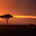Image: Mara Sunrise