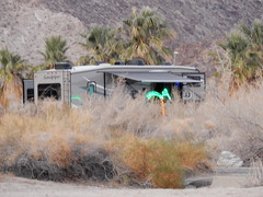 Borrego Palm Canyon Campground - neppalm