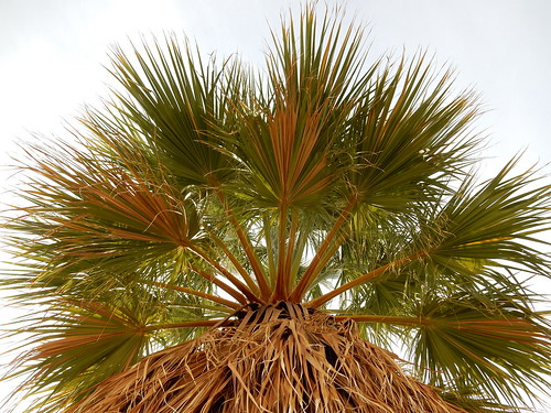 Mountain Palm Springs - 1