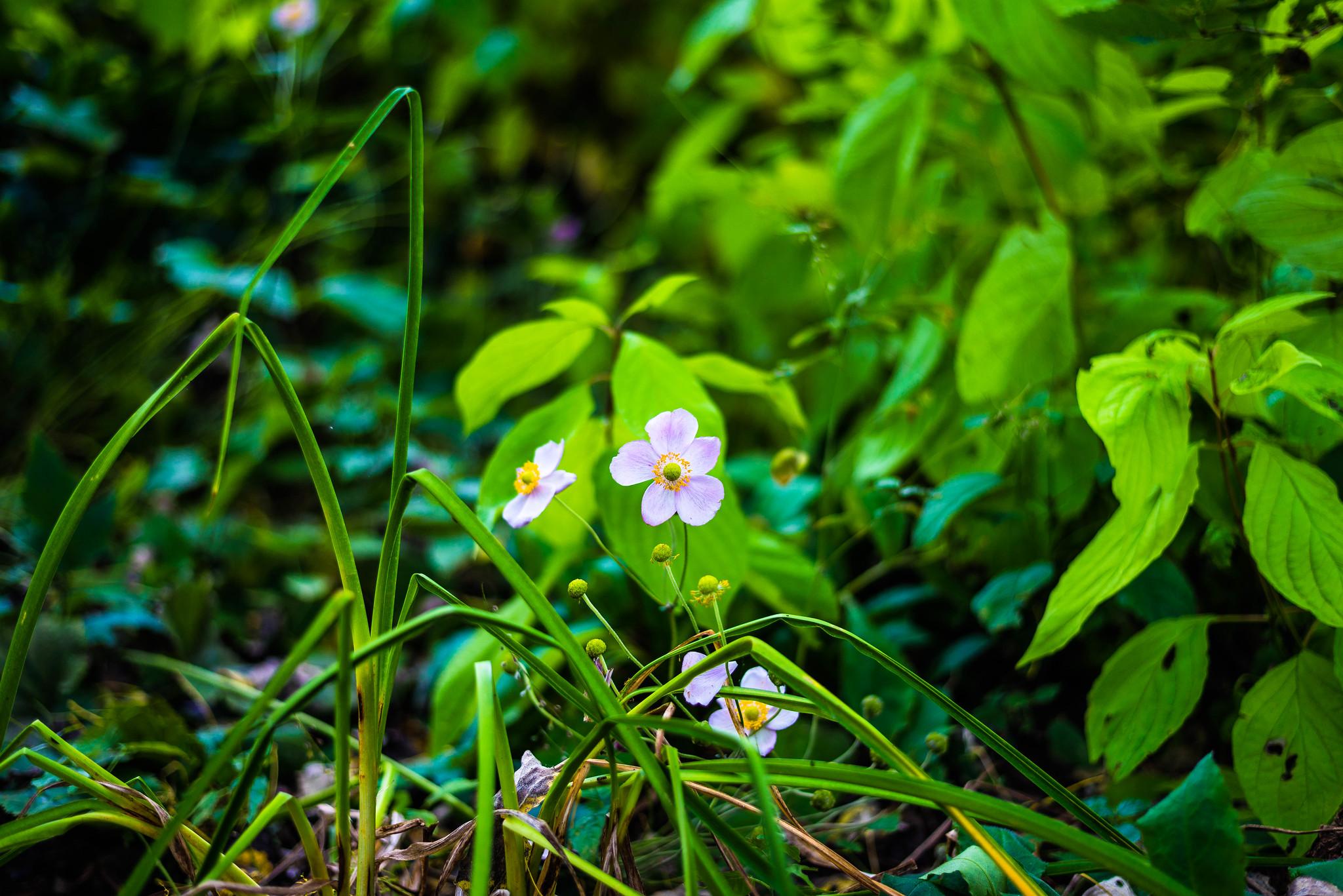 The Wildflowers are still peeking through