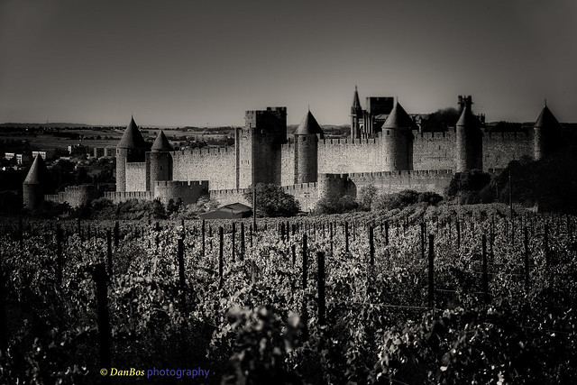 Carcassonne & Languedoc vineyards