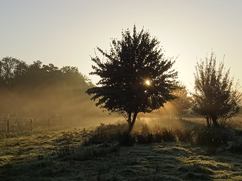morning autumn mist sunrise dew