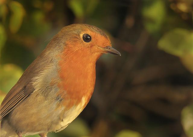 Robin - 176 of 215