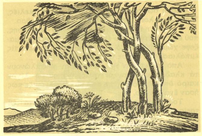 Γ΄Δημοτικού (1955) Εικ. Κ. Θετταλός