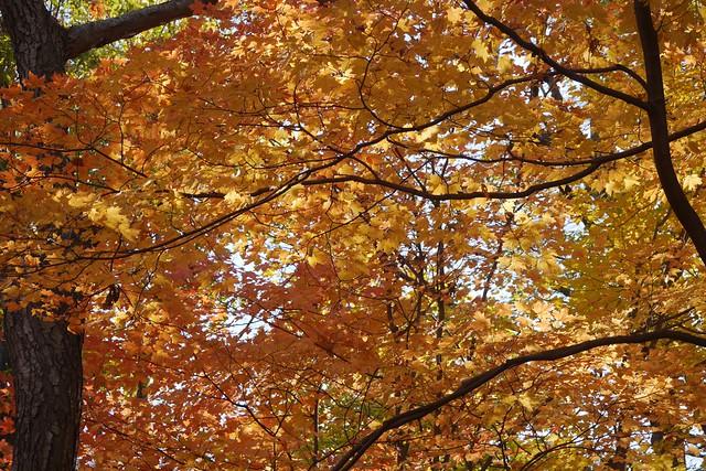 日, 2015-11-01 14:30 - Tillman Mountain State Park