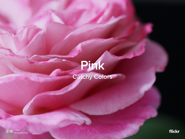 Catchy Colors: Pink