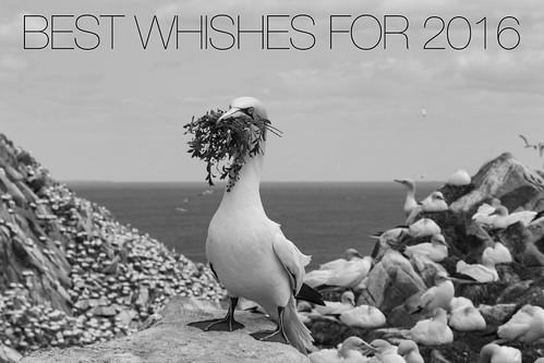 Best wishes for 2016! | by wwwYnand!