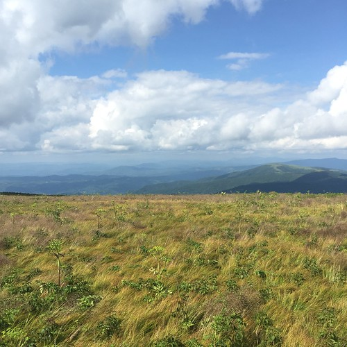 Roan Mountain Views