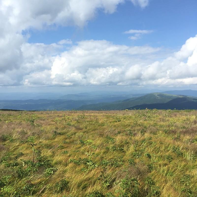 Roan Mountain Views