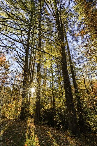 morning canon fallcolors fallfoliage sunburst blueridgeparkway blueridge linvillefalls 2015 canon6d mohibahmad