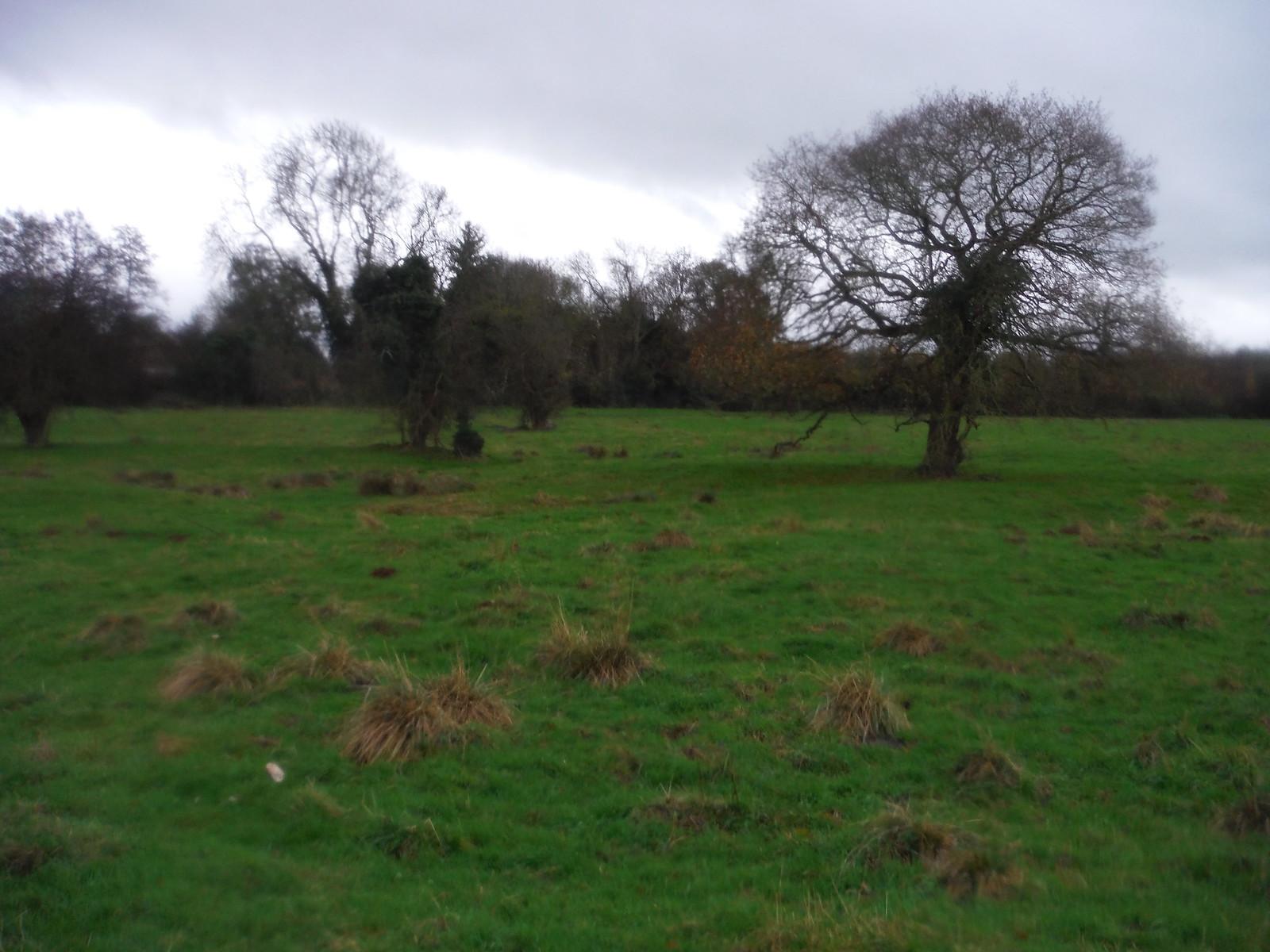Maggots Moor, Flitwick SWC Walk 232 Lidlington to Flitwick