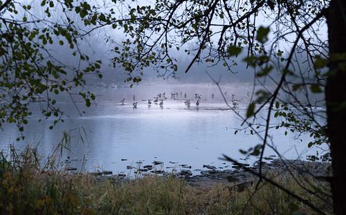 carletonplace fogmississippiriver riverwalktrail geese