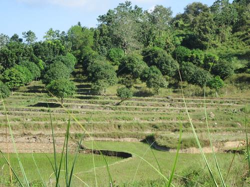 sanjose tarlac rice terraces luzon philippines asia world