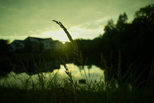 sunset green home water grass bokeh