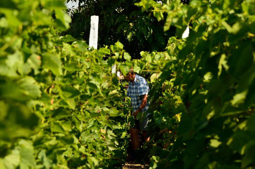 Happy vineyard