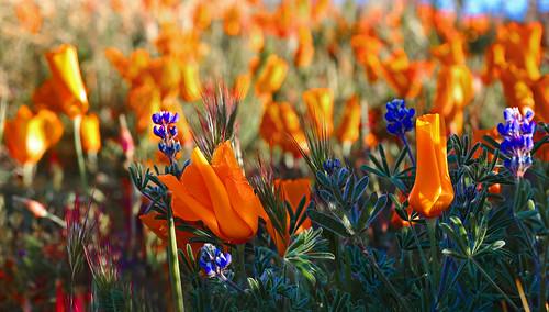 Wildflowers | by Rennett Stowe