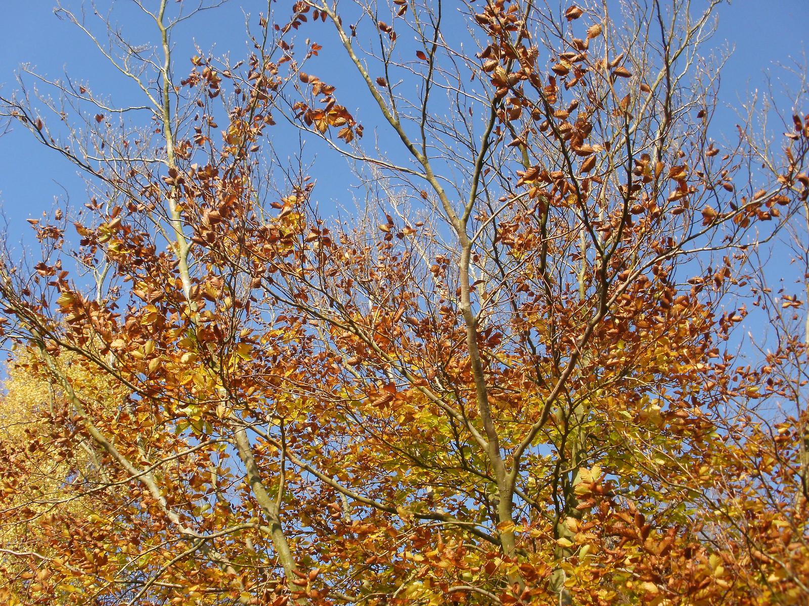 Autumn colours OLYMPUS DIGITAL CAMERA