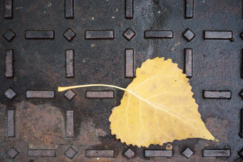 Signos del otoño