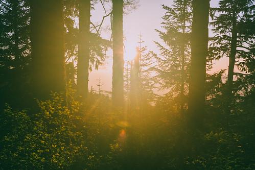 trees sunset sky sun mountain mountains forest us washington unitedstates outdoor hiking hike cascades backlit goldenhour granitefalls northcascades cascademountains mountpilchuck mtbakersnoqualmienationalforest