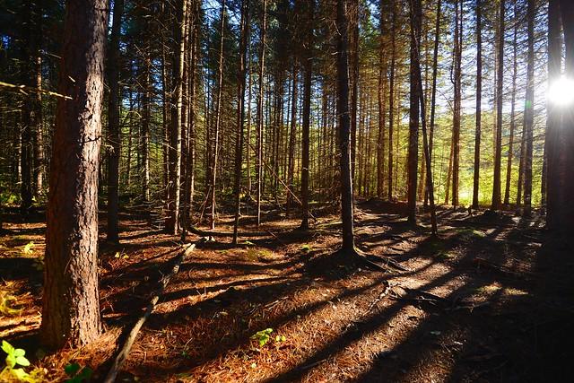 Centennial Ridges Trail, Algonquin Park