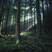 Bright light in dark forest by ☺dannicamra☺