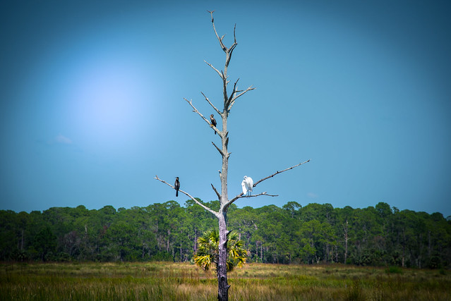 Bird Meeting near Lighthouse Road - Florida - USA