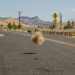 Dancing tumbleweed | by schnoogg