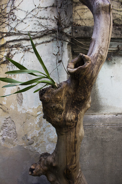 tienda de antiguedades tronco
