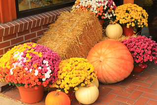 Fall colors - Downtown St. Joseph, Michigan | by gabepopa