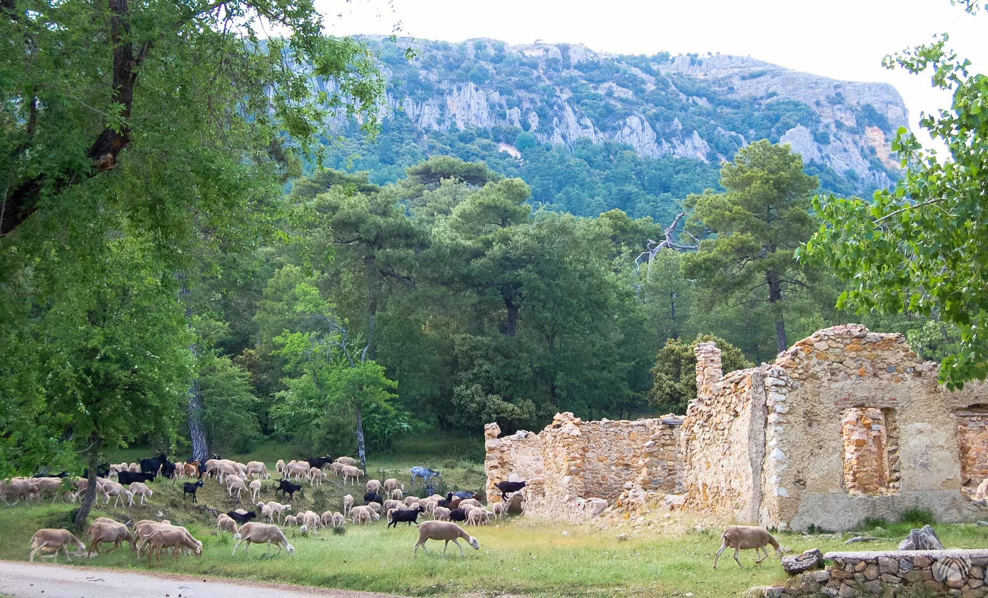 Casa Forestal del Campillo bajo el Yelmo