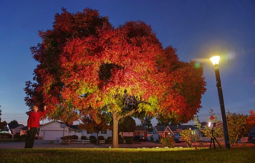 california street city autumn red plant tree fall colors lights raw dusk sanjose foliage clear sanfranciscobayarea cupertino siliconvalley sanfranciscobay hdr photomatix fav200 1xp nex6 selp1650